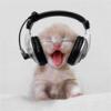 Problème scan des musiques - last post by hamstercat